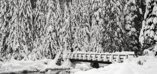 Bridge Pine Trees Lake Twenty Two Mt Baker Snoqualmie National Forest Washington Snow Winter Wonderland Pacific Northwest PNW